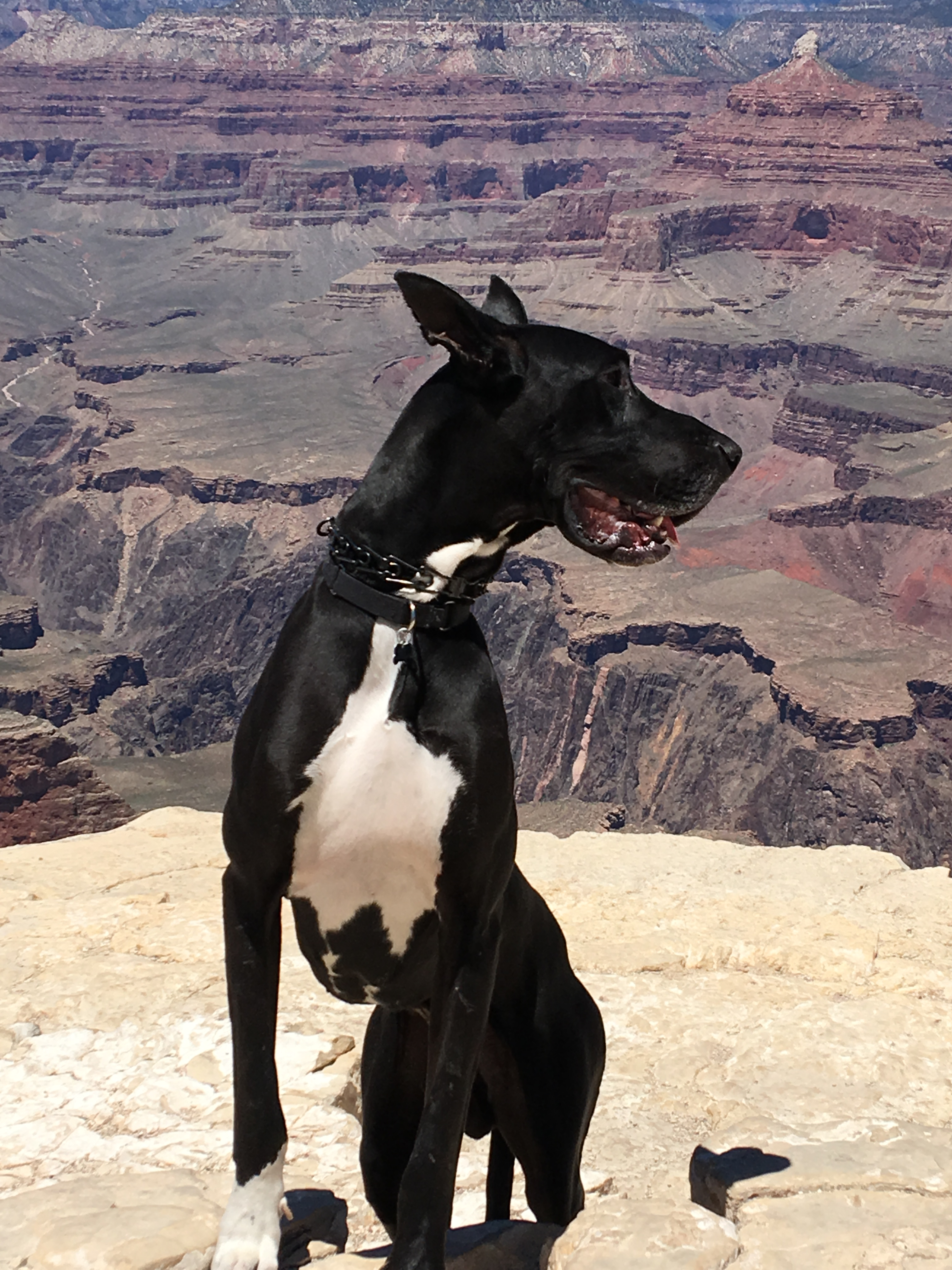 Bringing Your Pet to the Grand Canyon